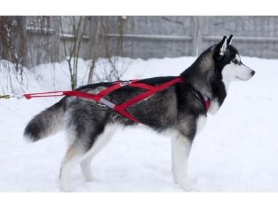 Шлейка ездовая для собак
